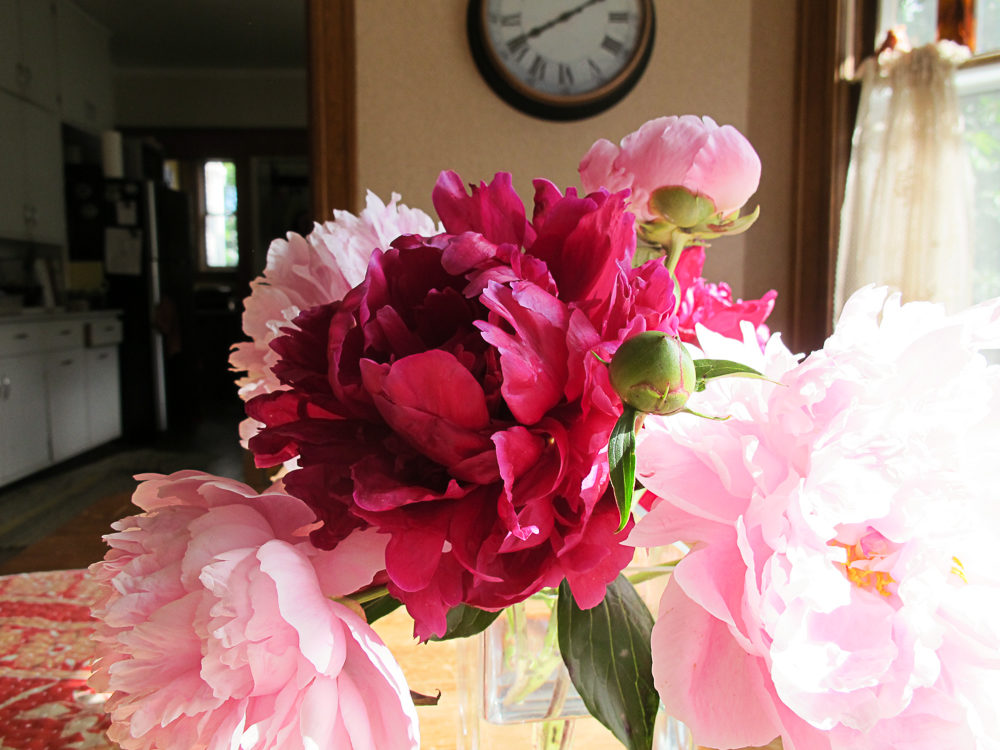 how to cut peonies 3 - How To Cut Peonies