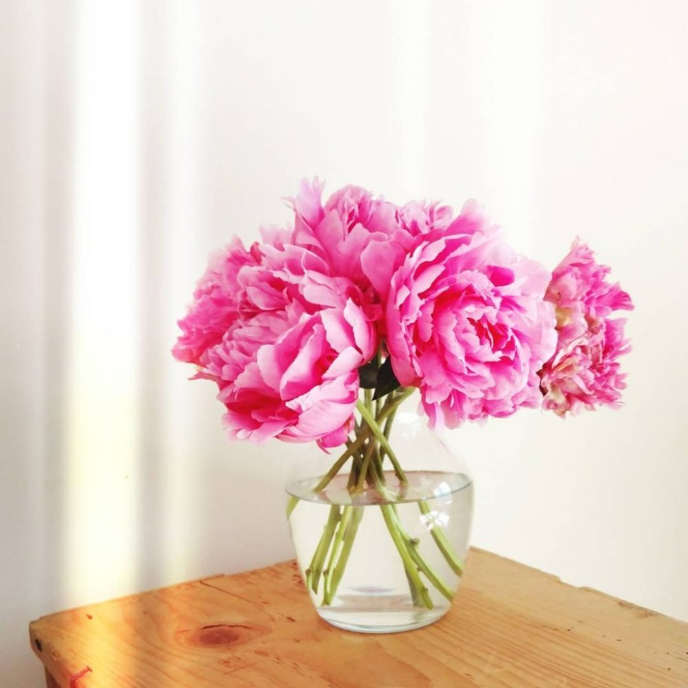 The highlight of my June is always peonies. My three peony bushes in the backyard have kept me well-stocked with fluffy pink bouquets for the last few weeks.